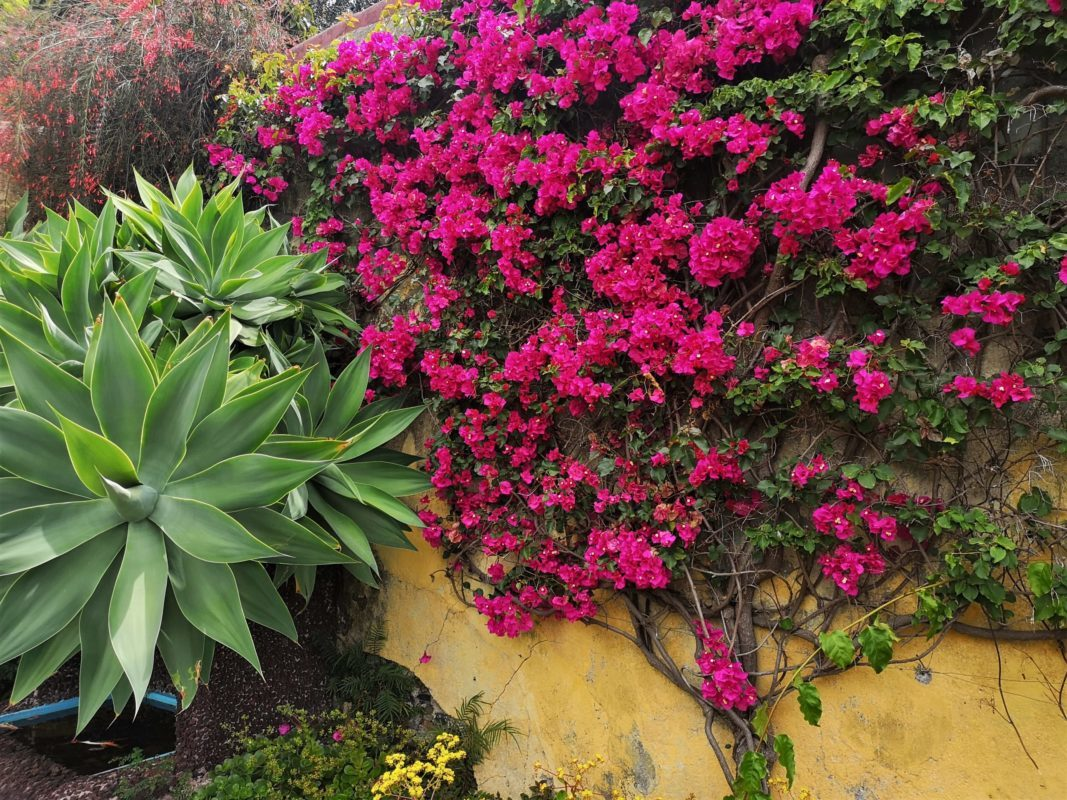 Bakancslistás látnivalók Madeirán Lindával, Botanikus Kert