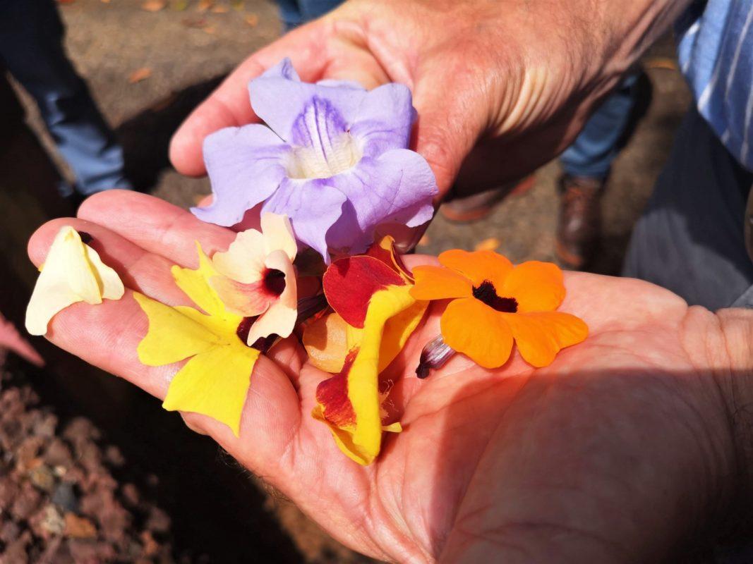 Hidden gems in Botanical Garden Madeira with Linda